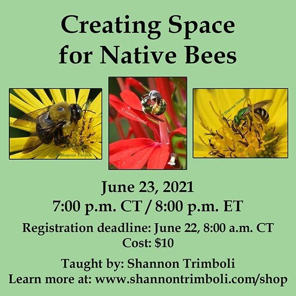 Creating-Space-for-Native-Bees_June-2021